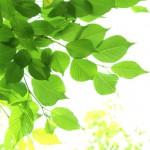 注文住宅 ブログ 地域型グリーン化事業